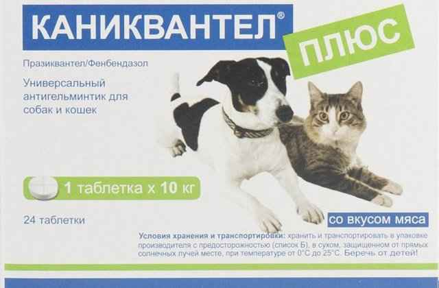 Обзор инструкции по использованию Каниквантела для кошки от глистов