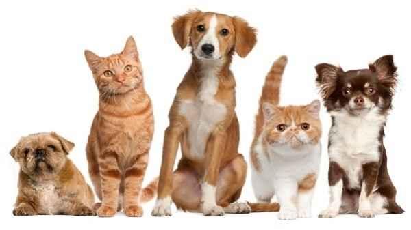 Красивые клички для кошки: по породе, со значением, для привлечения удачи и другие