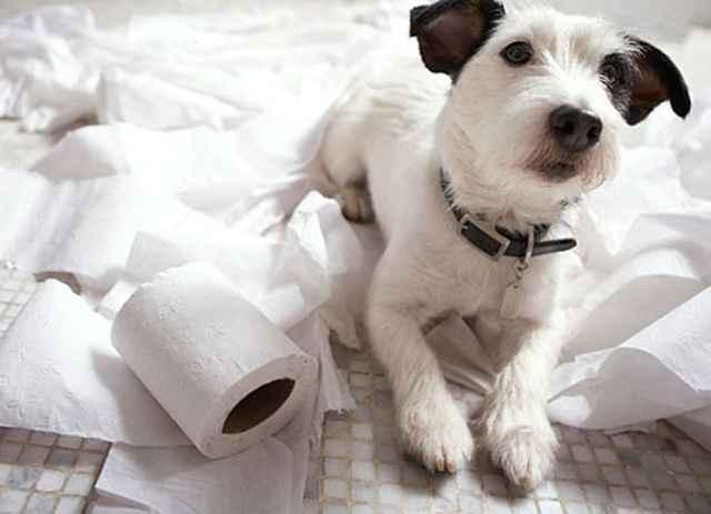 Описание лотков со столбиками и стенкой для собаки мелкой породы для мальчиков