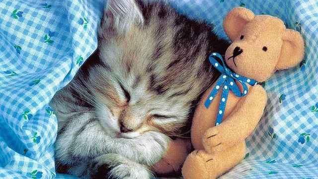 Причины длительного сна у кошачьего рода: почему много едят и как долго отдыхают
