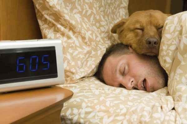 Почему собаки любят спать с хозяином на кровати и можно ли позволять это