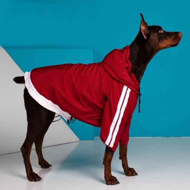 Какую одежду выбрать для большой собаки: особенности гардероба крупной породы