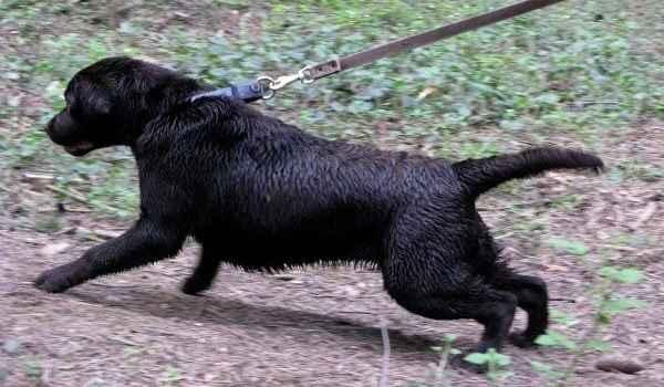 Техника обучения щенка и взрослой собаки выполнению команды «сидеть»