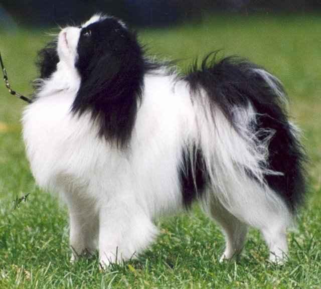 Каковы причины синдрома обратного чихания у собаки и каковы его симптомы