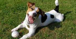 Честный рейтинг 10 самых глупых в мире пород собак с объяснениями