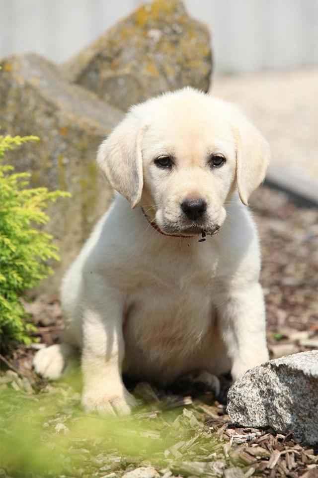 Правильная частота глистогонки собак и щенков в домашних условиях