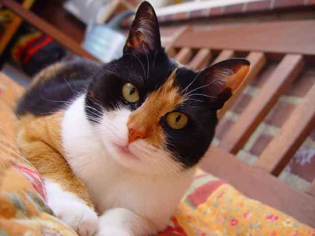 Способ применения и дозировка суспензии и таблеток Стоп-цистит для кошки