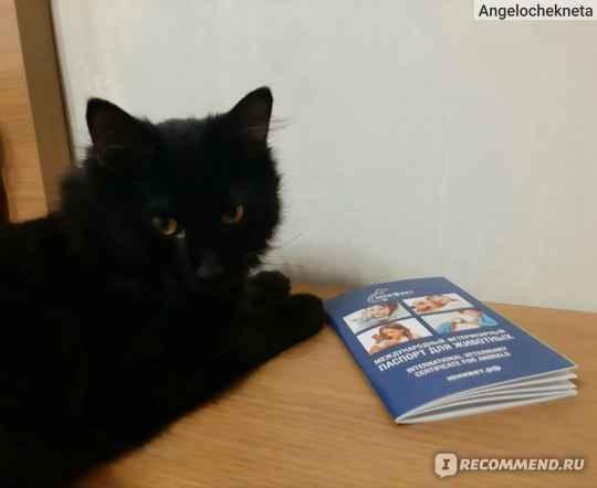 Как получить ветеринарный паспорт для кота: особенности международного образца