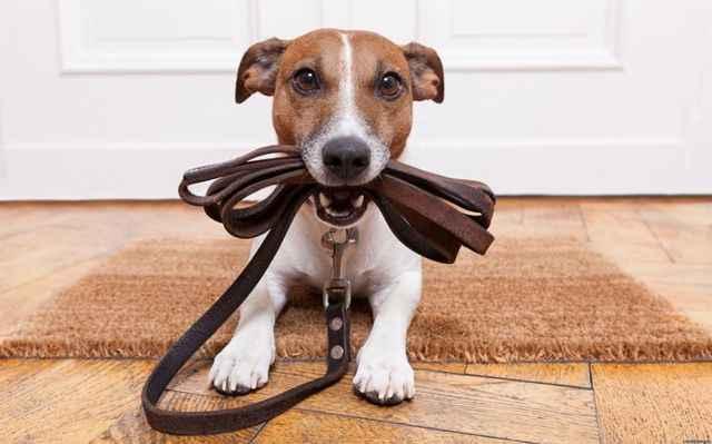 Какие методики помогут быстро обучить свою собаку выполнять команды