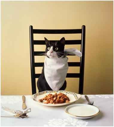 Из чего состоит корм для кошки и котенка grandorf: подробное описание