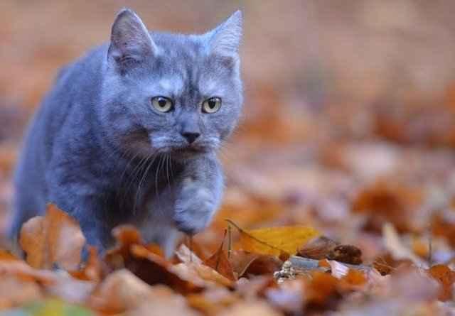Причины пропадания из дома молодых и старых котиков: народные приметы