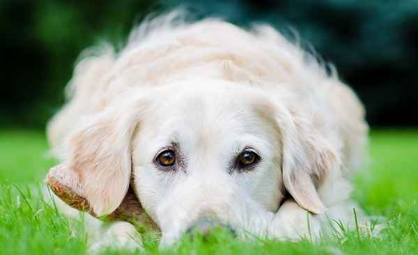 Как лучше всего назвать охотничью собаку: список популярных кличек