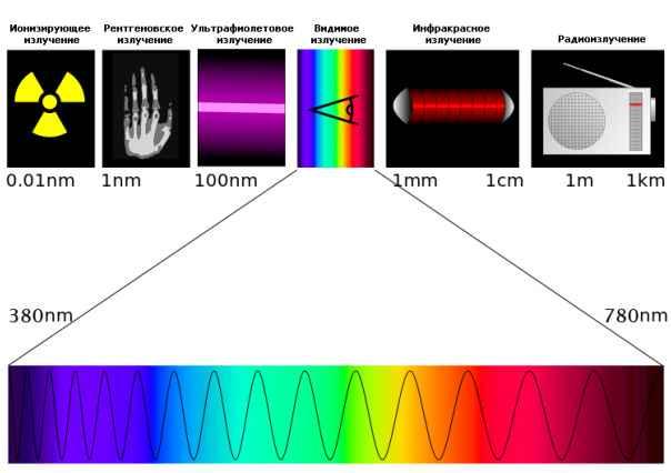 Причина светящихся глаз: отражение лучей, особый слой клетки в оболочке и другие
