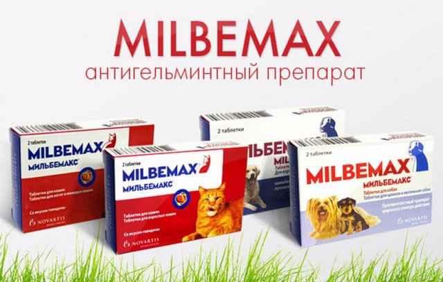 Способ применения таблеток от глистов мильбемакс для кошки, дозировка