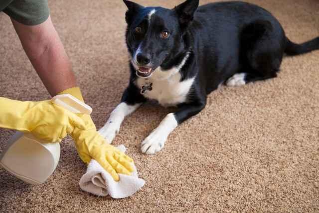 Методики и порядок избавления от неприятного запаха мочи от собаки дома