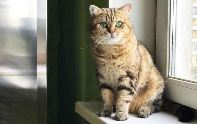 После кастрации коты метят территорию: примеры что делать и когда перестанет