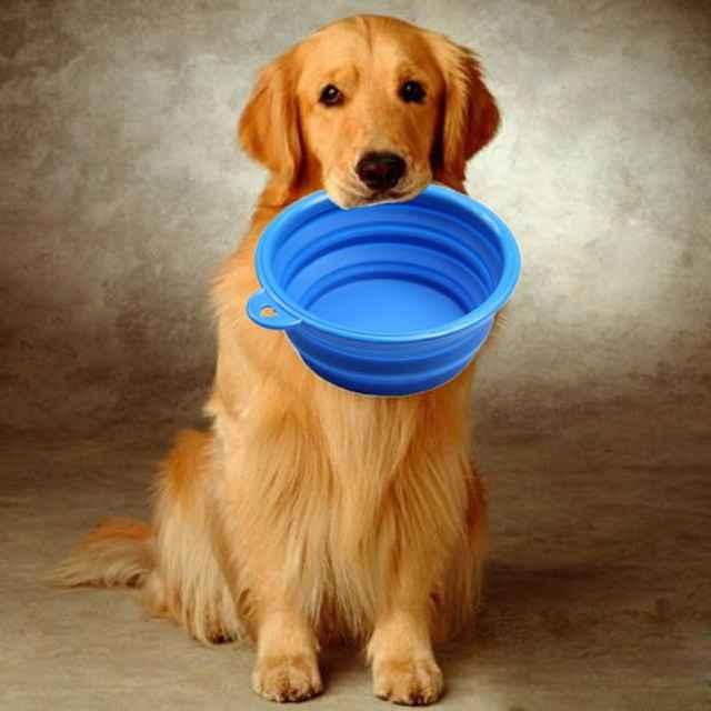 Какими продуктами из натуральной пищи лучше всего кормить собачку дома