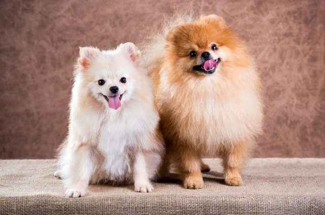 Как прикольно назвать собаку: обзор самых смешных и необычных имен