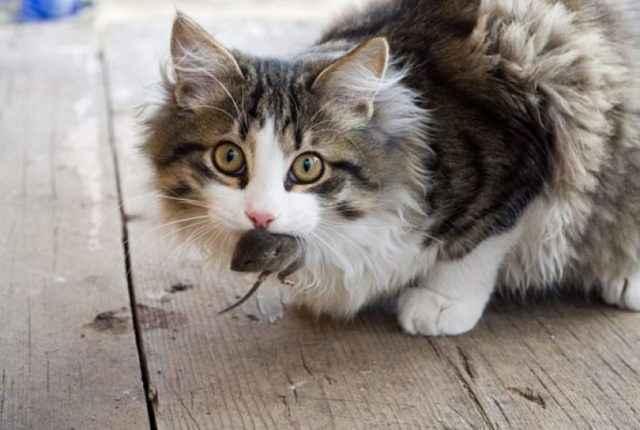 Обзор глистогонных средств для кошки: применение антигельминтных препаратов