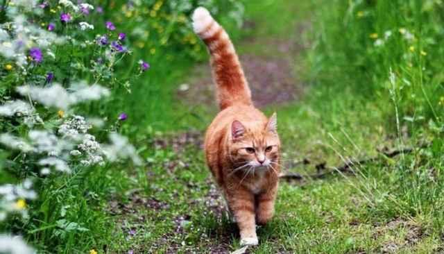 Как правильно применять таблетки Бравекто для кошки: обзор инструкции