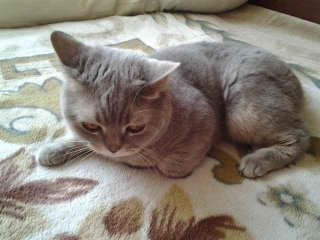 Особенности симптоматики и лечения инсульта у кошки, чем кормить кота