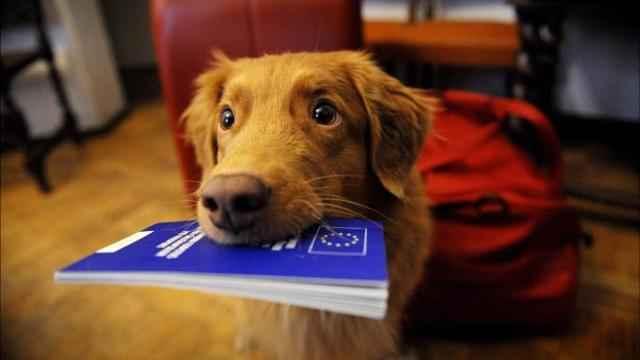 Порядок заполнения международных ветеринарных паспортов для собак