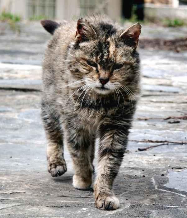 Вирус панлейкопении кошки: все о симптомах и лучших способах лечения