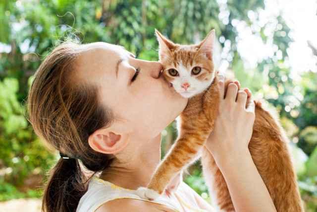 Может ли кошачья блоха покусать человека: опасны ли они для людей