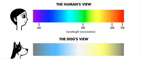 Сколько цветов видят собаки: какие оттенки способны различить питомцы