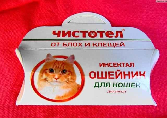 Несколько простых способов достать клещей у кошек самостоятельно дома