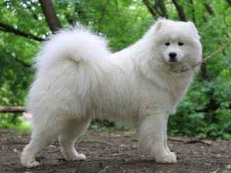 Как называются породы собак, которые внешне похожи на лису с короткими лапами