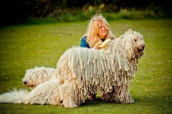 Какие существуют разновидности овчарок: названия и описание пород
