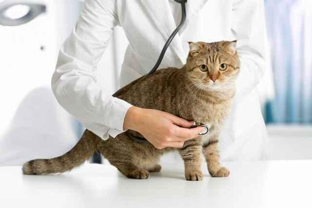 Варианты усыпления кошки: методы эвтаназии без ветеринара и в домашних условиях