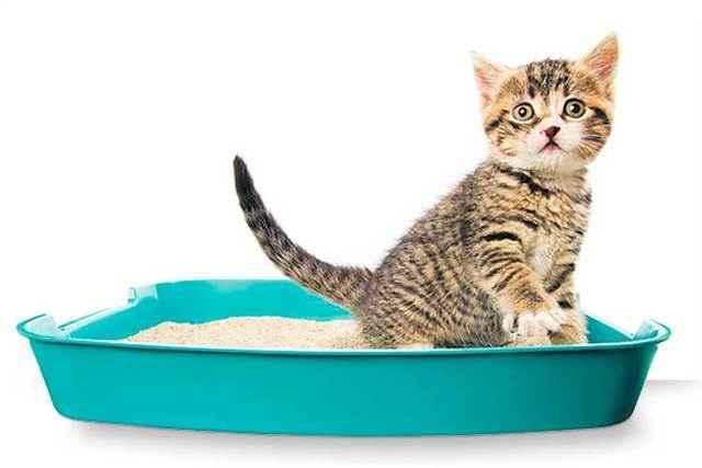 Все о лотках для кошки: как выбрать лучших туалет с высоким бортиком и решетками