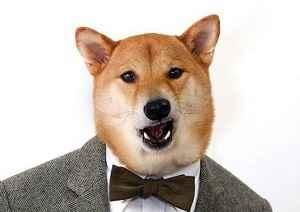 Каким именем лучше назвать щенка мальчика: выбор красивой клички для собаки