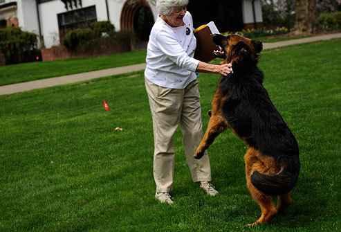Как самостоятельно научить собаку не прыгать на встретившихся людей от радости