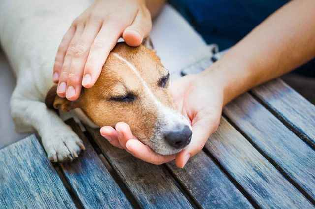 Что может означать начало судорог, высокое слюноотделение и пена изо рта у пса
