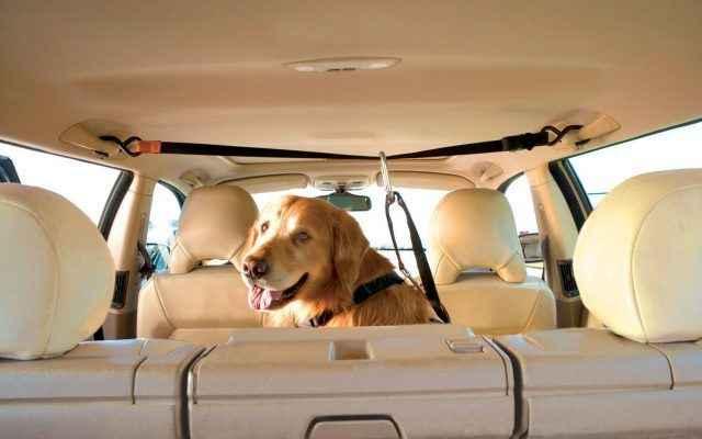 Как правильно перевозить собаку в машине на дальнее расстояние: правила