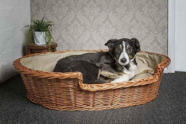 Как самостоятельно сшить лежанку для собак собственноручно в домашних условиях