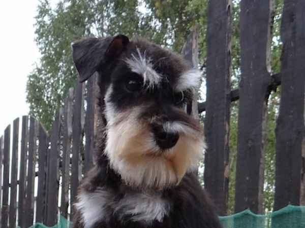Какую породу собак лучше всего выбрать для начинающего собаковода