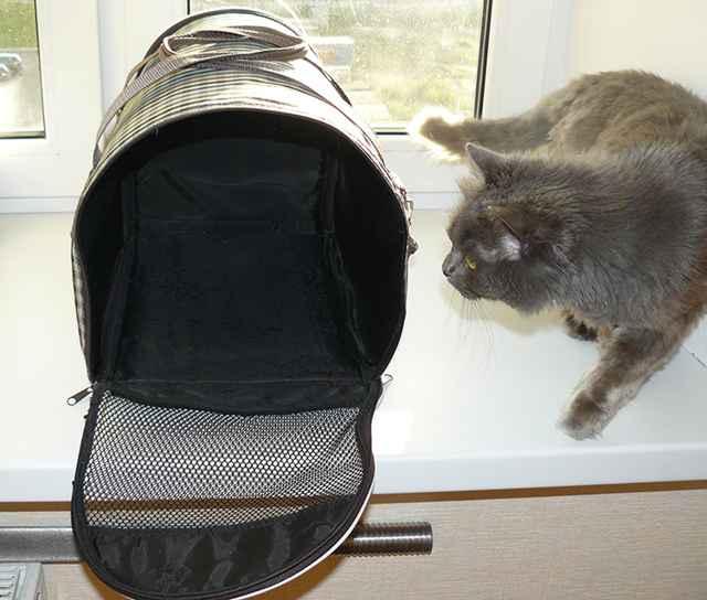 Описание важных правил при перевозке кошек в поездах РЖД дальнего следования