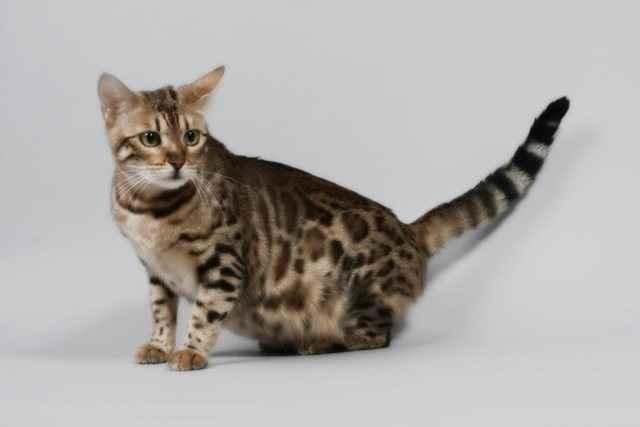 Как рождаются котята у кошек: длительность родового процесса и его описание
