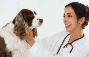 По каким причинам собаку может рвать с желчью, если у нее пропал аппетит
