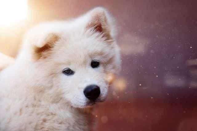 Как выбрать японскую или корейскую кличку для собаки для мальчика и девочки