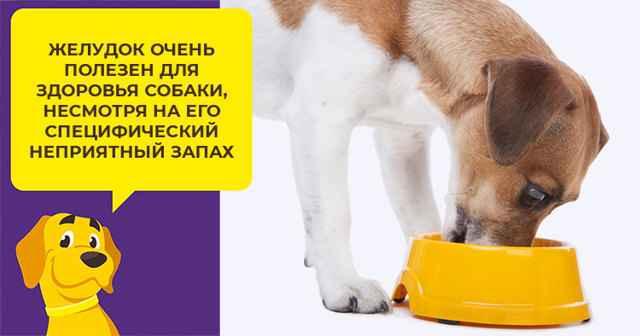 Какое мясо можно давать собакам: выбор и нормы кормления субпродуктами