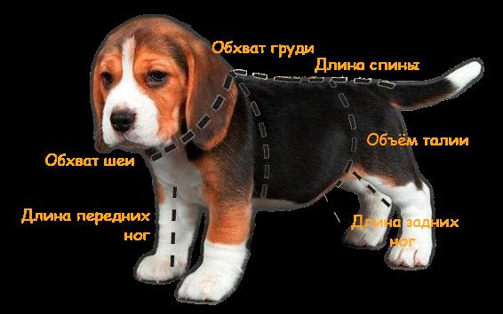 Как правильно измерить собаку для одежды: каких размеров бывают вещи