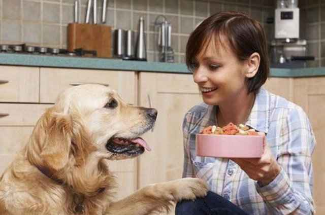Подробный обзор кормов Пробаланс для собачек разных пород и размеров