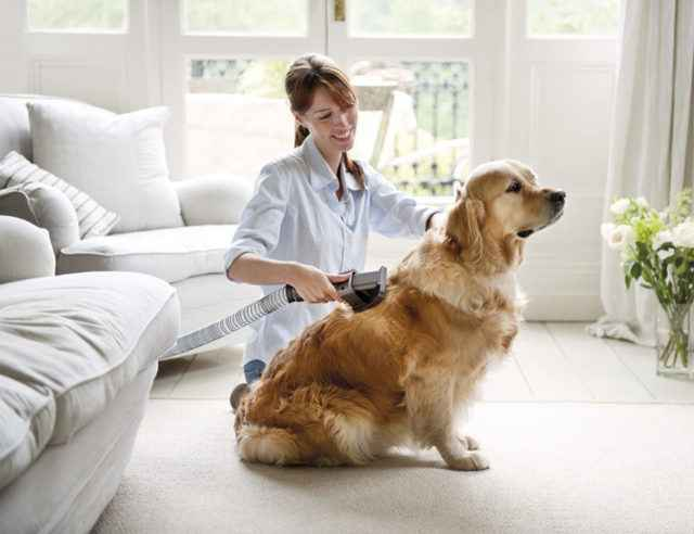 Есть ли линька у шпицев: много ли выпадает шерсти у собак и что делать
