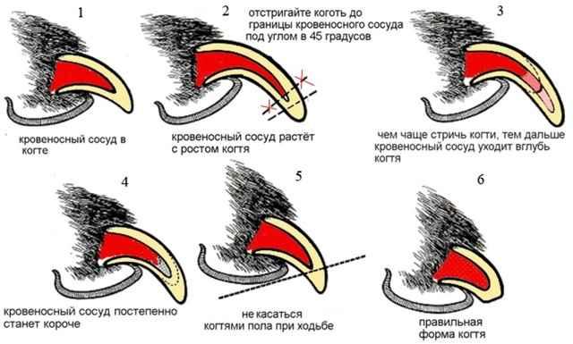 Методы приучения к стрижке когтей, инструменты, частота проведения процедуры