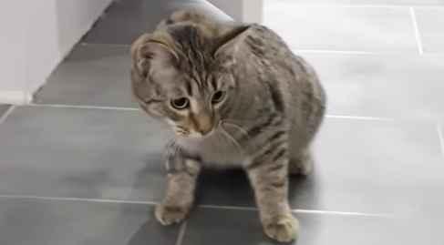 Варианты как отвадить кота, что бы не гадил в неположенных местах: на пол и другие